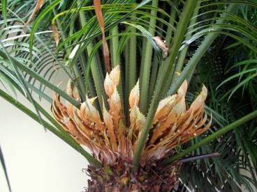 Palm flowers.