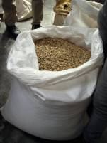 Coffee beans after picking, fermenting, and drying.