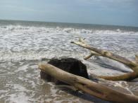 I <3 driftwood.