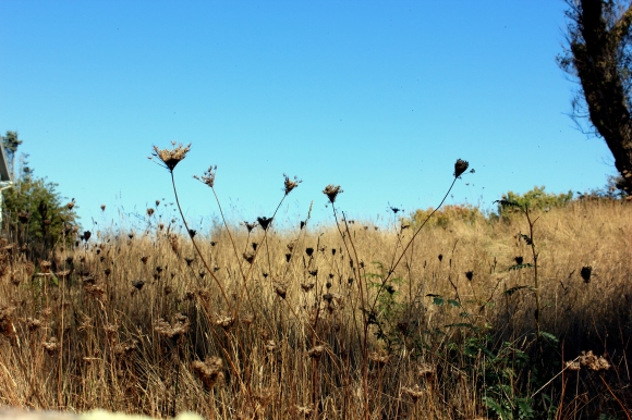 Artsy grass