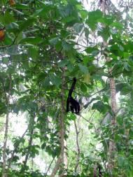 Monkey butt!