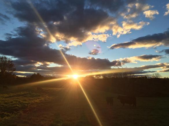 Quick Rhinebeck Recap | Woolen Diversions