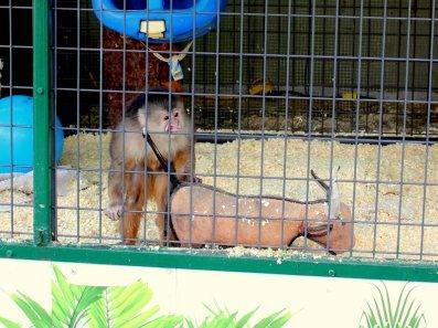 Disturbing monkeyface