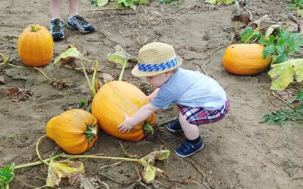 Pumpkins are heavy!